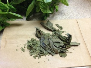 Basil dried