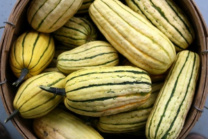 Delicata Squash photo by Elizabeth Wheeler