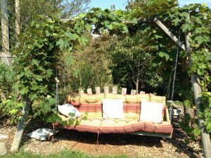 Our grapevine-covered backyard swing.